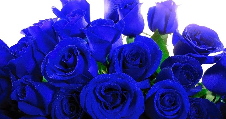 Arti Warna Biru